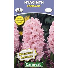 Carnival Hyacinth Bulb Fondant 3 Pack